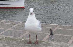 Click image for larger version.  Name:gull.jpg Views:0 Size:58.0 KB ID:1427